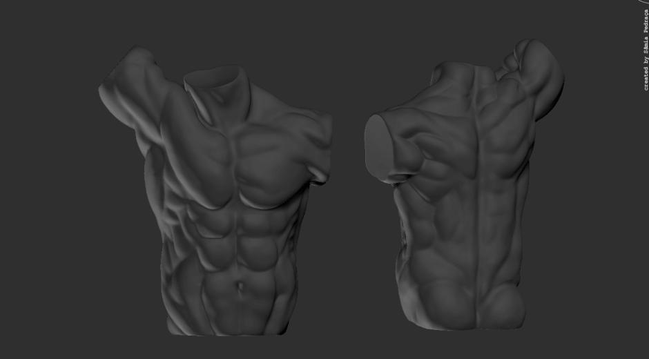 anatomy-study_mtorso