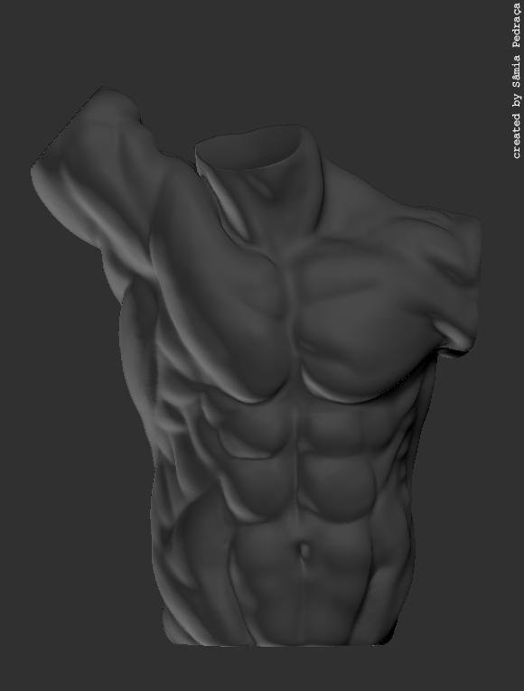 anatomy-study_mtorso1
